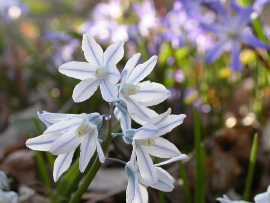 Blueandwhiteflowers