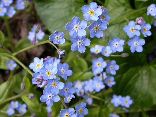 Blueflowers It S Like Being Out In Nature Without The Messy Scary Dangerous Parts Everything Looks So Natural When Fact Thousands Of Man Hours Are